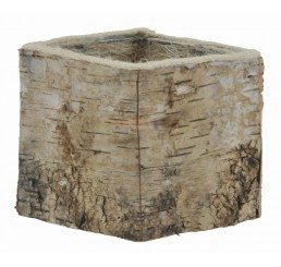 "4.25"" Square Birch Container"